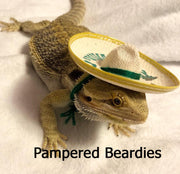 Sombreros for your Bearded Dragon, Snakes, & Small Pets!  Three sizes.