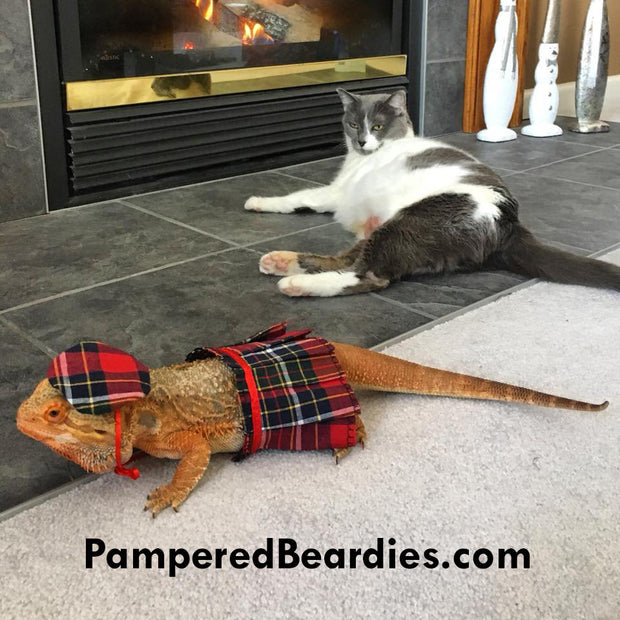 Scottish Kilt & Tam for Bearded Dragons, Reptiles and Small Animals! One size fits most, adjustable