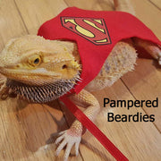 Super Hero Capes for Bearded dragons, Reptiles, and Small Animals! Superman, Supergirl, Batman, Batgirl. Two sizes.