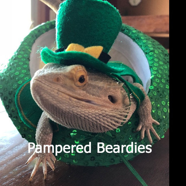 St Patrick's Day Leprechaun Costume and photo props for Bearded Dragons, Reptiles, and Small Animals!
