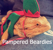 Elf Costume for Bearded Dragons, Reptiles, and Small Animals!