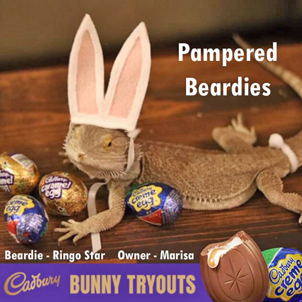 Bunny Ears & Fluffy Tail for Bearded Dragons, Reptiles, and Small Animals!