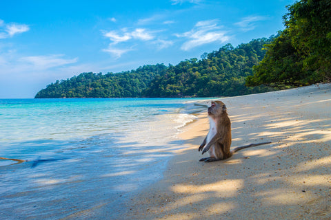Monkey On the Beach