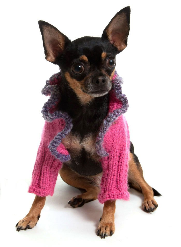 Deep Pink Dog Sweater Shrug with Heather Purple Trim at neck
