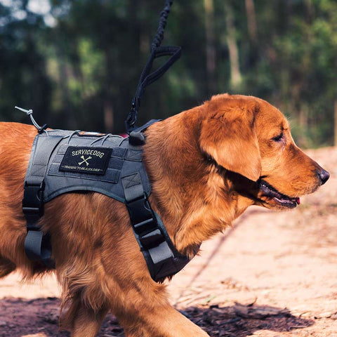 Tactical Dog Harness  (Black)