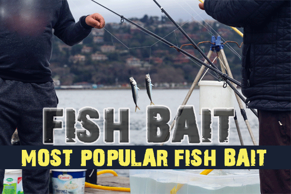 What's the most popular fish bait?