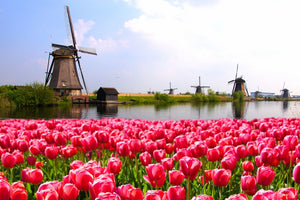TOP 5 MUST VISIT PLACES IN AMSTERDAM DURING SPRING SEASON