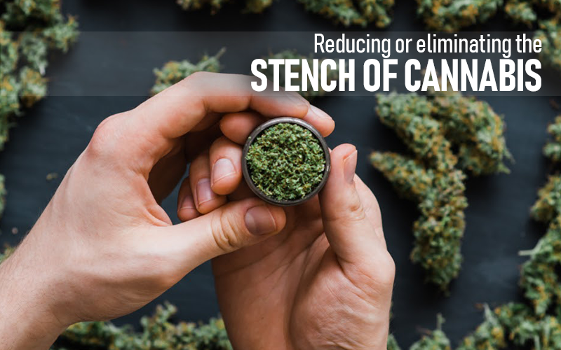 Reducing Or Eliminating The Stench Of Cannabis
