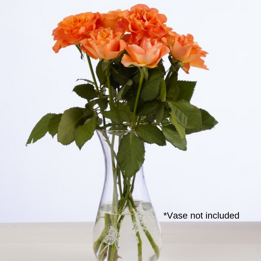 Orange Roses - 20 Stems