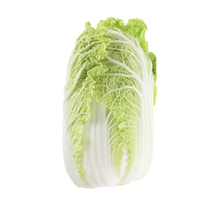 Chinese Cabbage - Zucchini Greengrocers LTD