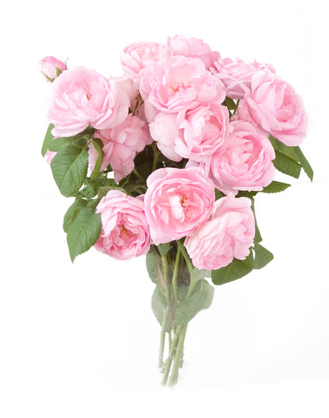 Pink Roses - 20 Stems