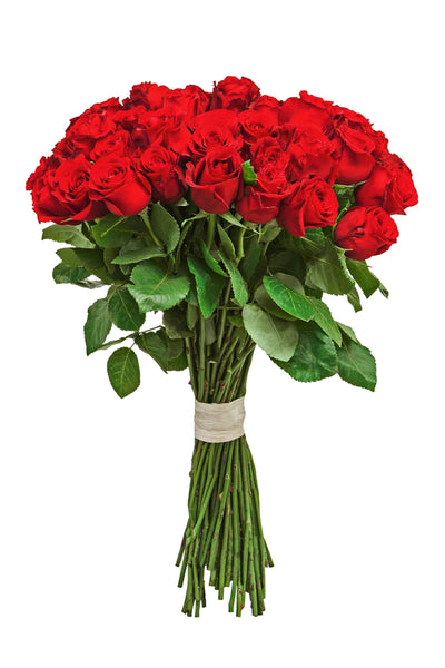 Red Roses - 20 Stems