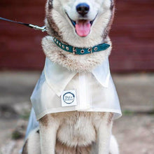 Pet Raincoat With Reflective Straps - Pet's Welfare