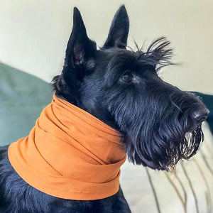 Pet Neck Scarf - Pet's Welfare