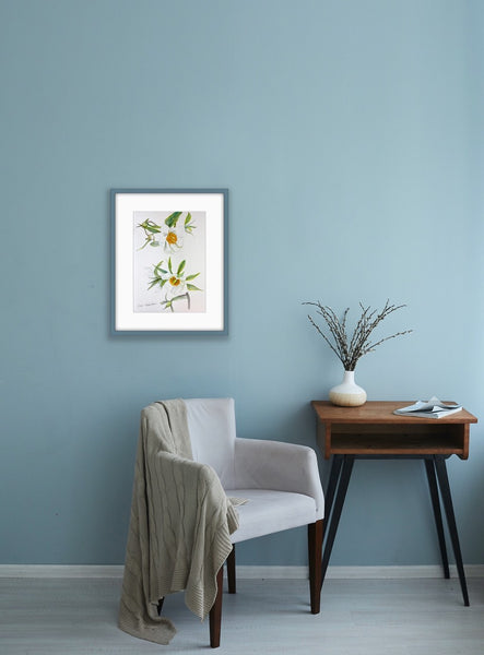 Early Windflower in Your Home