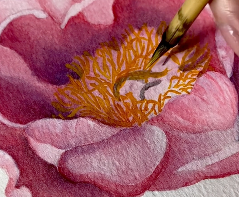 Peony of the Month - February - Lovely Rose detail