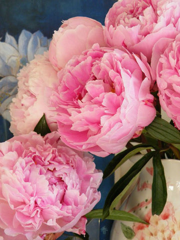 Fresh peonies in a vase