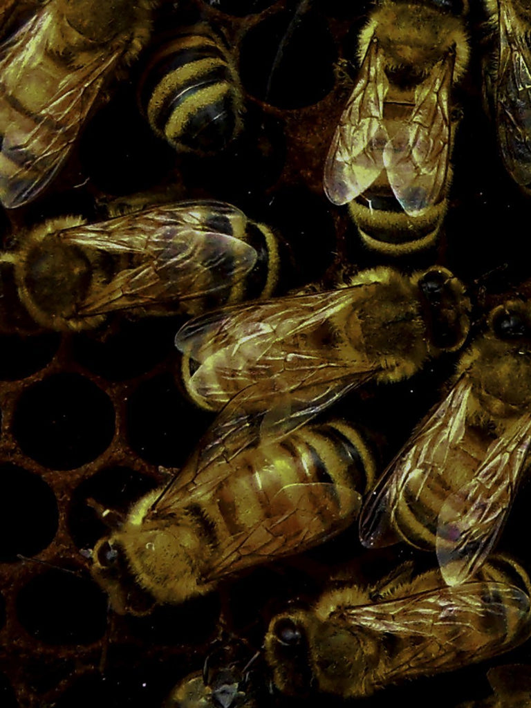 How we can help save bees