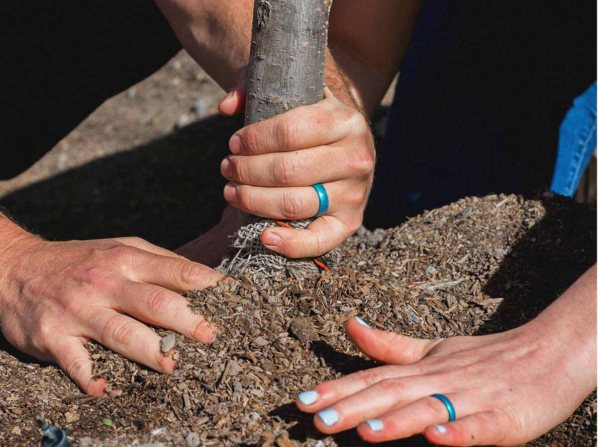 Enso planted more than 30 trees for Earth day 2018