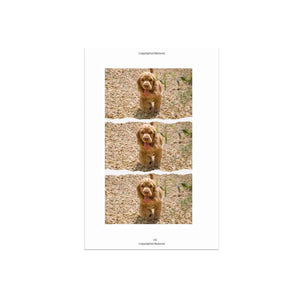 """Perfect cocker spaniel"" Paperback, Full Colour Edition - by Natalia Ashton - Puppylicious Boutique Dog Bandanas"