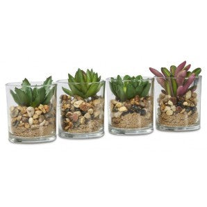 Glass Jar with succulent- Small