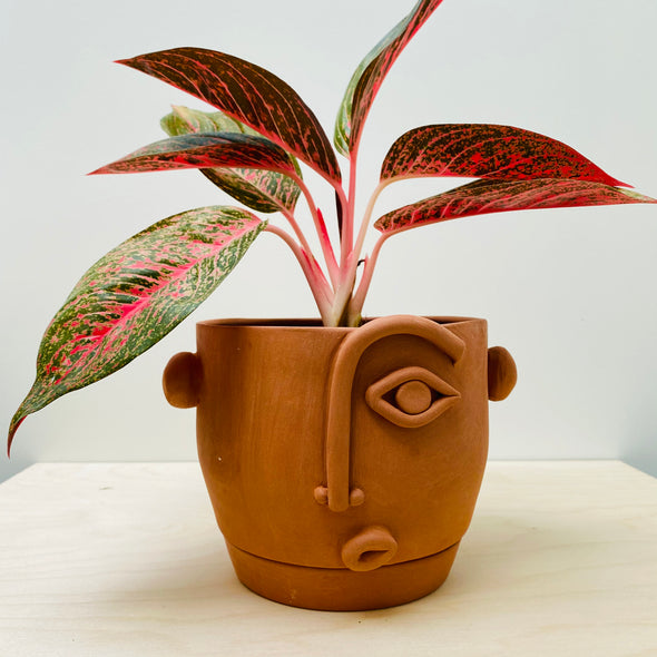 Terracotta face planter