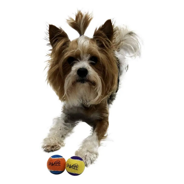 "Midlee Squeaky Small Tennis Ball for Dogs 1.5""- Pack of 12 (Yellow/Purple)"