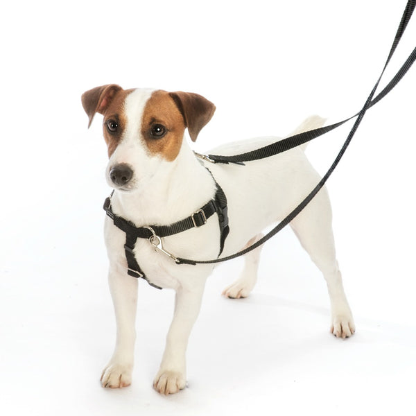 Medium Black Freedom No-Pull Harness Only, No Leash