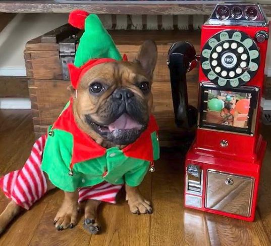 Midlee Dog Elf Costume