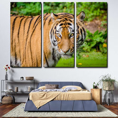 Tiger 3-Piece Canvas Wall Art Set