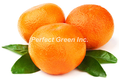 Orange Count 72, Each, USA