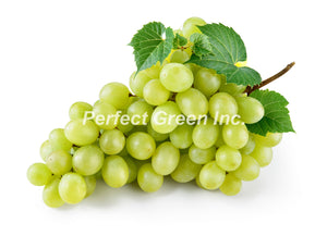 Grapes Green 18 lbs, Case
