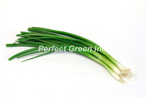Onion Green Bunch - Mexico