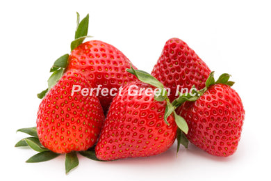 Strawberries 1 lb, Pint, USA