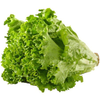 Lettuce Green Leaf Size 24, Case, USA