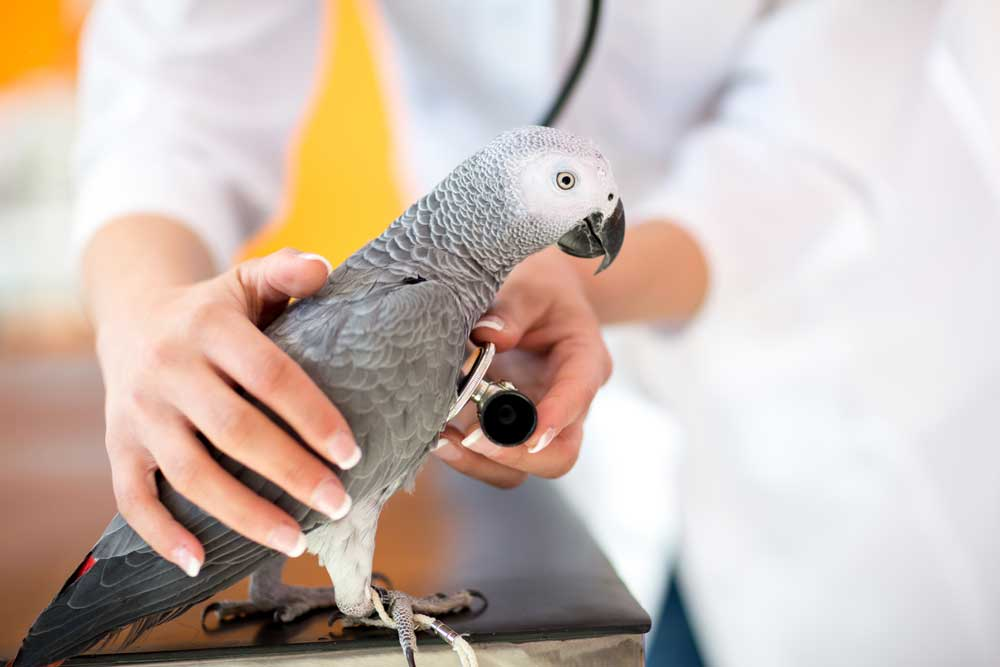 How to Keep Your Pet Parrot Healthy and Happy!