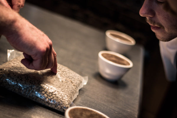 Backroom: Bird Rock Coffee Tasting