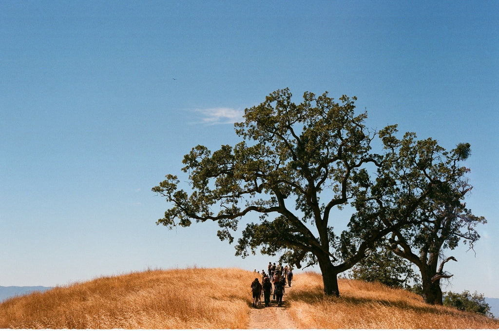 tree-middle-of-hilltop-hiking