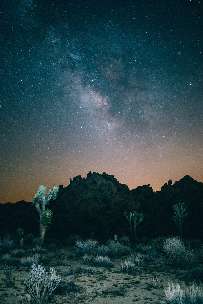 joshua-tree-night-time-sky-long-exposure-photo