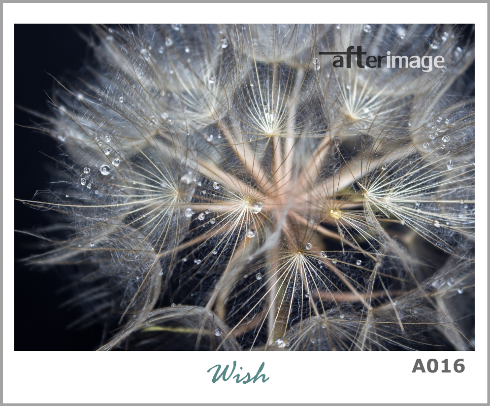 """Dandelions"" - Printed Canvas set - afterimage.canvas"