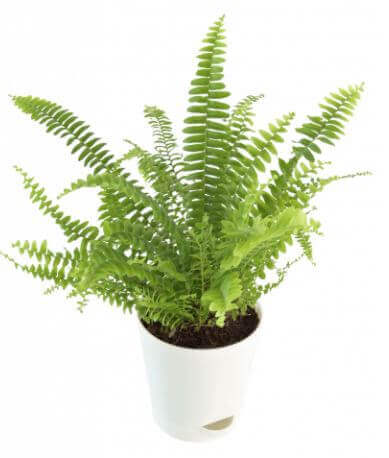 fern-green-small-plant-cake-plaza