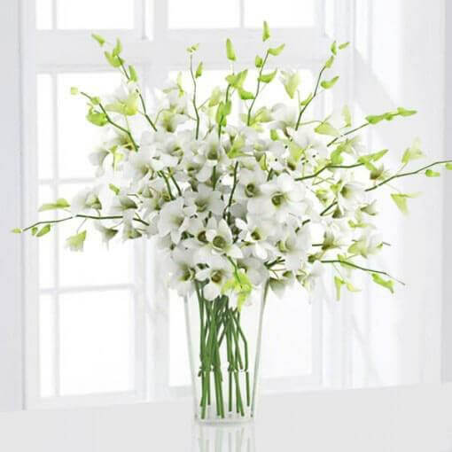 6 White Orchids in a Vase