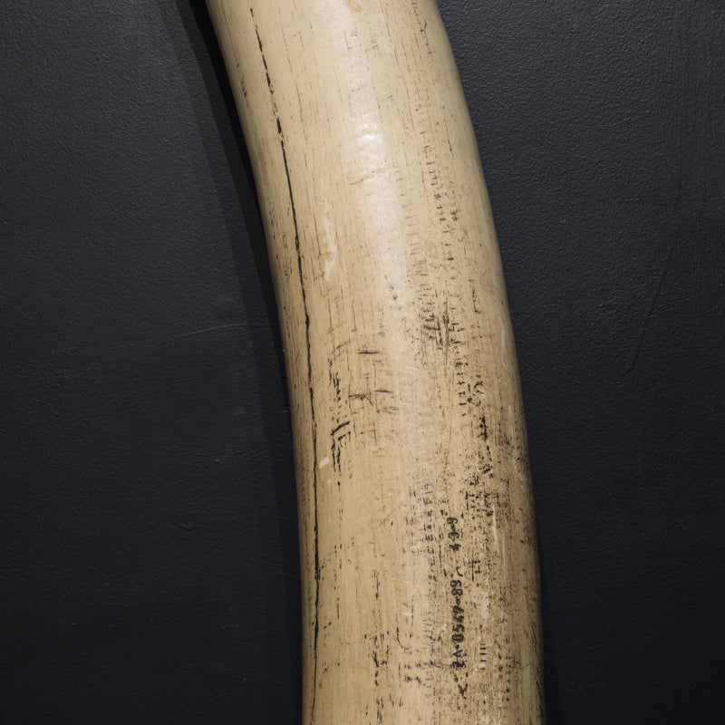 Monumental Pair of Mid-century Faux Elephant Tusks c.1970