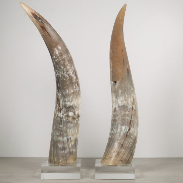 Custom Mounted Large Texas Longhorn Cattle Horns on Acrylic