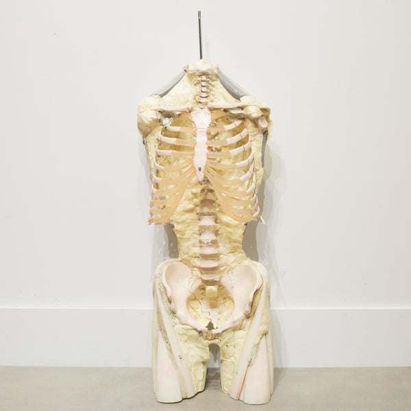 Military Anatomy Class Resin Skeleton c.1970