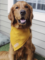 """Miss Honey"" Pet Bandana"
