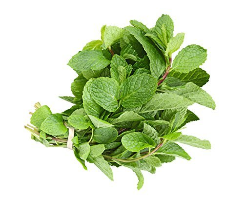MINT LEAF FRESH - 500GMS