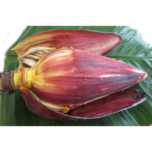 BANANA FLOWER - 1PC