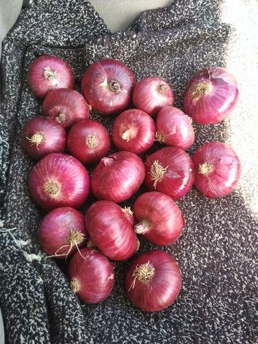 ONION 55MM FRESH - 10KG
