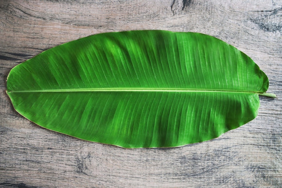 BANANA LEAF - 20PCS